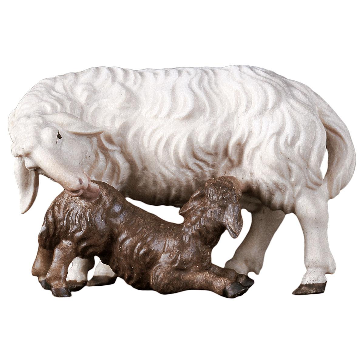 Schaf mit Lamm säugend