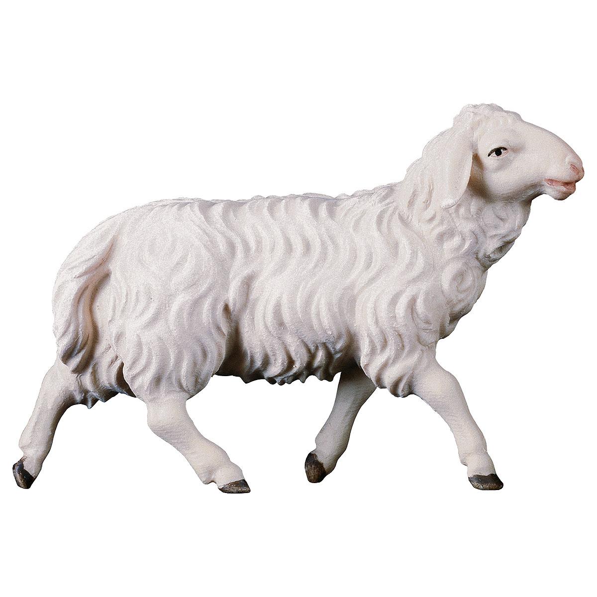Schaf laufend
