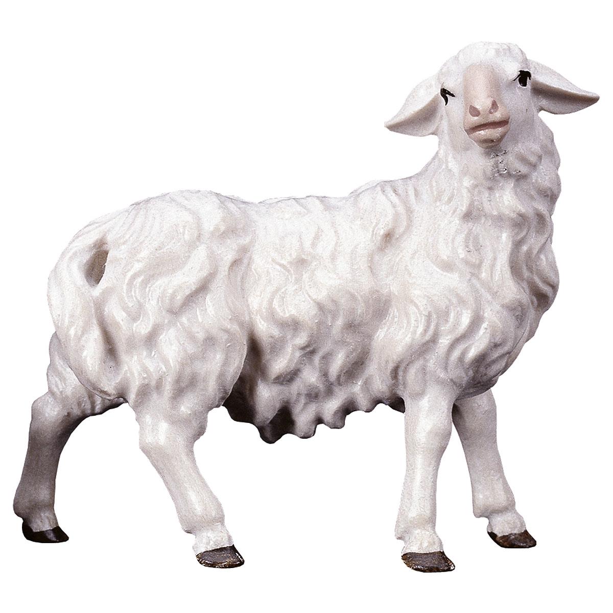 Schaf nach rechts schauend